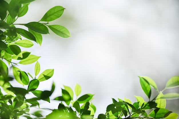 Piękny Natura Widoku Zieleni Liść Na Zamazanym Greenery Tle Pod światłem Słonecznym Z Bokeh I Kopii Przestrzenią. Premium Zdjęcia