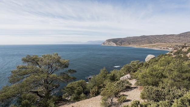 Piękny Ocean Krajobraz I Zielone Drzewa Darmowe Zdjęcia
