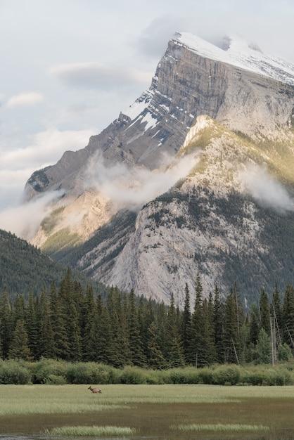 Piękny Pionowy Strzał Gór Otoczony Zielonymi Sosnami Darmowe Zdjęcia