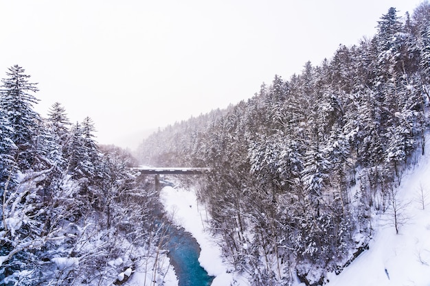 Piękny plenerowy natura krajobraz z shirahige siklawą i mostem w śnieżnym zima sezonie Darmowe Zdjęcia