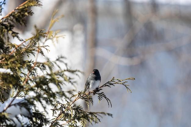 Piękny Ptasi Obsiadanie Na Gałąź Darmowe Zdjęcia