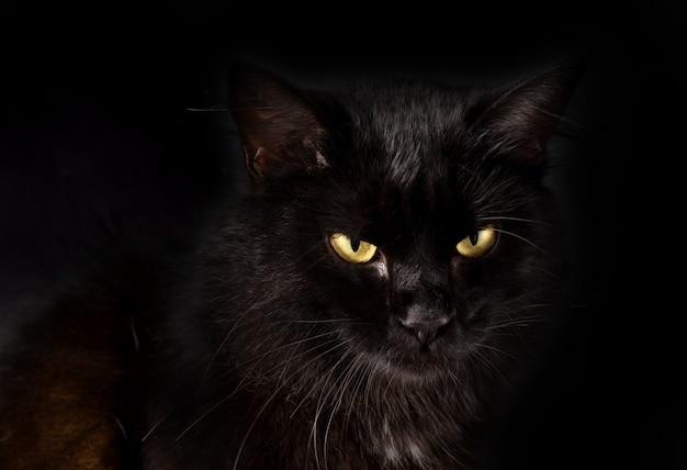 Piękny puszysty czarny kot o żółtych oczach Premium Zdjęcia