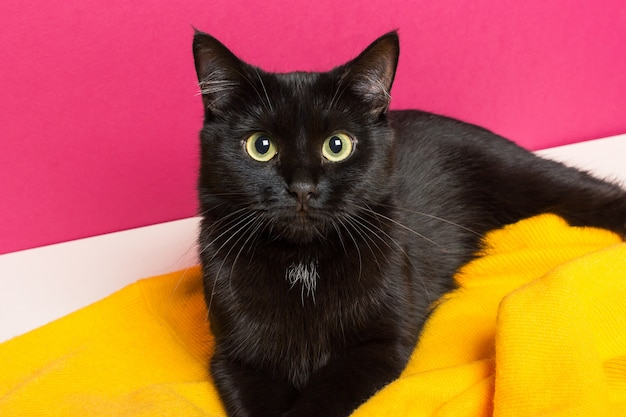 Piękny śliczny czarny kot leży w domu na jasnożółtej wełnianej kratce. opieka nad zwierzętami. Premium Zdjęcia