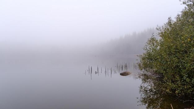 Piękny Strzał Drewniany Molo Odbijał W Morzu Otaczającym Drzewami Zakrywającymi Z Mgłą Darmowe Zdjęcia