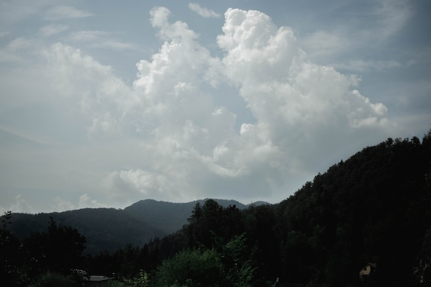 Piękny Strzał Drzew I Zalesionej Góry W Oddali W Pochmurny Dzień Darmowe Zdjęcia