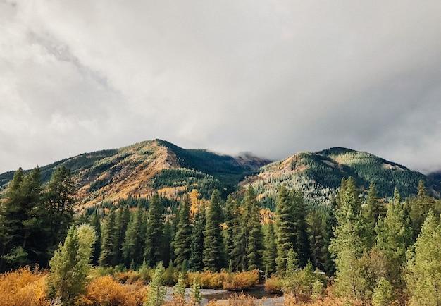 Piękny Strzał Drzewa Blisko Wody Z Zalesionymi Górami I Chmurnym Niebem Darmowe Zdjęcia