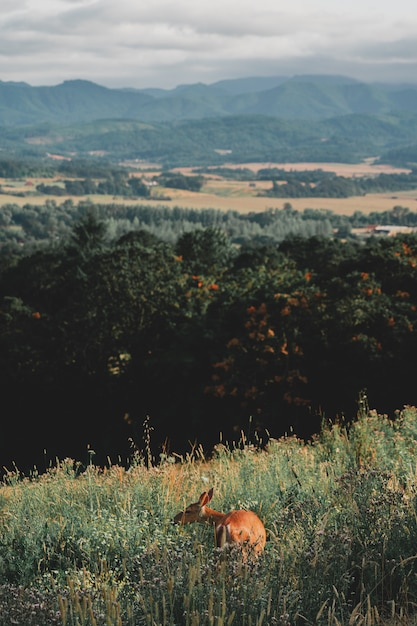 Piękny Strzał Dziki Brown Pokryty Rogacz Na Zielonym Wzgórzu W Lesie Darmowe Zdjęcia