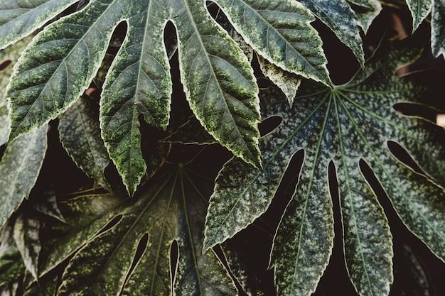 Piękny Strzał Egzotycznych Liści Tropikalnych Darmowe Zdjęcia