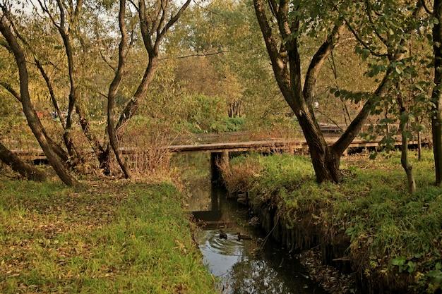 Piękny Strzał Kaczki Pływa W Wodzie W Parku W Moskwa Darmowe Zdjęcia