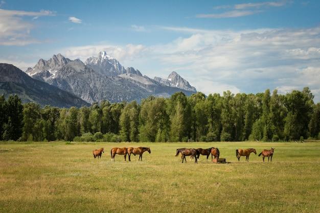 Piękny Strzał Konie W Trawiastym Polu Z Drzewami I Górami W Odległości Przy Dniem Darmowe Zdjęcia