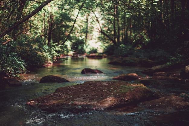Piękny Strzał Rzeka W Lesie Troszkę Darmowe Zdjęcia