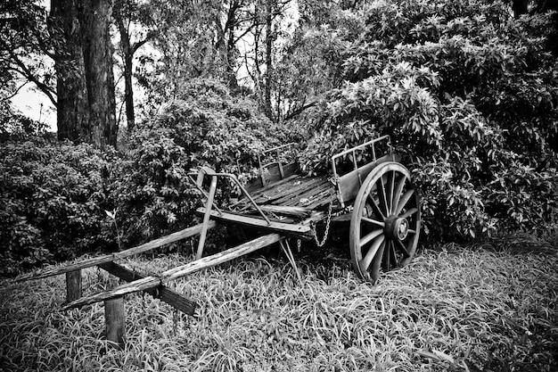 Piękny Strzał Stara łamająca Końska Fura Blisko Drzew W Czarny I Biały Darmowe Zdjęcia