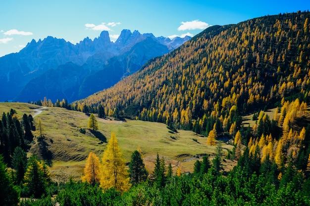 Piękny Strzał Trawiasty Pole Z żółtymi I Zielonymi Drzewami Na Wzgórzu Z Górą I Niebieskim Niebem Darmowe Zdjęcia