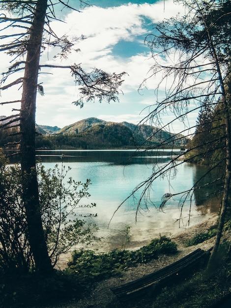 Piękny Strzał W Scenerii Jeziora I Lasu Z Zielenią Darmowe Zdjęcia