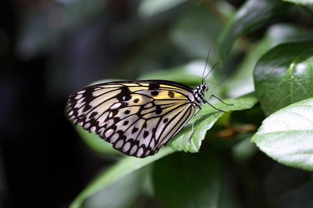 Piękny Tropikalny Motyl Na Zamazanym Natury Tle Premium Zdjęcia