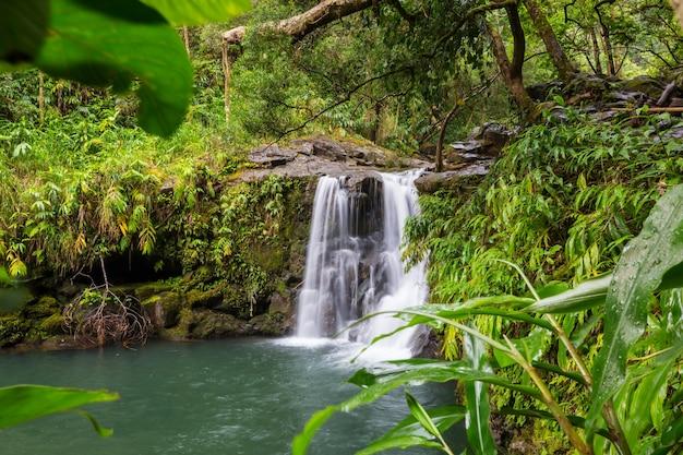 Piękny Tropikalny Wodospad Na Hawajach Premium Zdjęcia