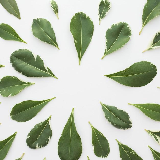 Piękny Układ Zielonych Liści Na Białym Tle Darmowe Zdjęcia