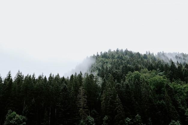 Piękny Widok Na Drzewa W Lesie Deszczowym Uchwycony W Mglistej Pogodzie Darmowe Zdjęcia