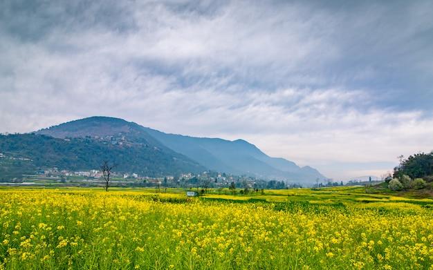 Piękny Widok Na Farmę Musterd W Katmandu, Nepal. Premium Zdjęcia