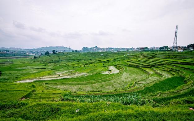 Piękny Widok Na Farmę Ryżową Z Zielenią Ryżową, Katmandu, Nepal. Premium Zdjęcia
