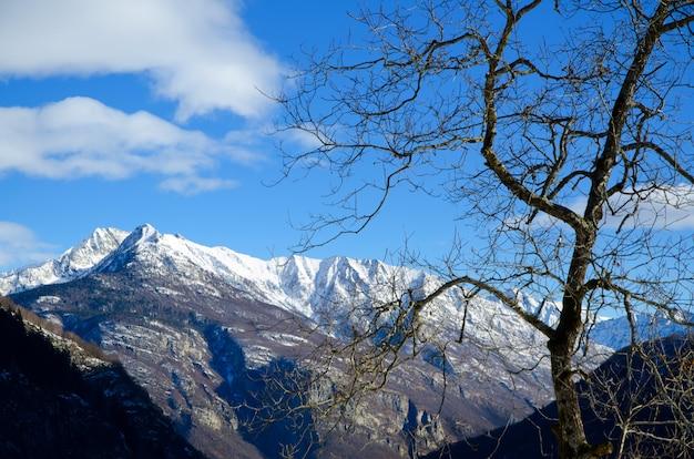 Piękny Widok Na Suszone Drzewo Z Pokrytymi śniegiem Górami I Błękitnym Niebem Darmowe Zdjęcia