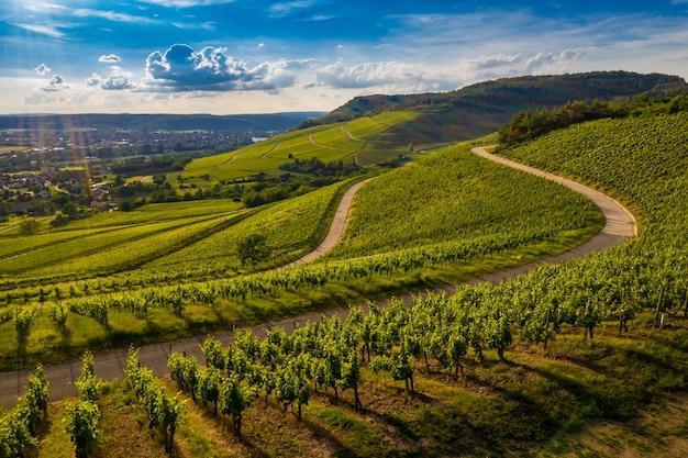 Piękny Widok Na Winnicę Pośród Zielonych Wzgórz O Zachodzie Słońca Darmowe Zdjęcia