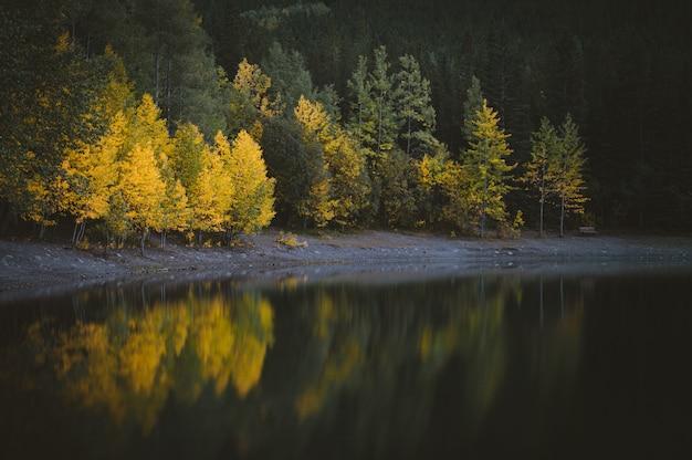 Piękny Widok Na Wodę W Pobliżu Lasu Z Zielonymi I żółtymi Drzewami Darmowe Zdjęcia