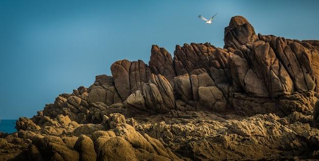 Piękny Widok Na Wspaniałe Skaliste Klify Nad Morzem I Latającego Ptaka Morskiego Darmowe Zdjęcia