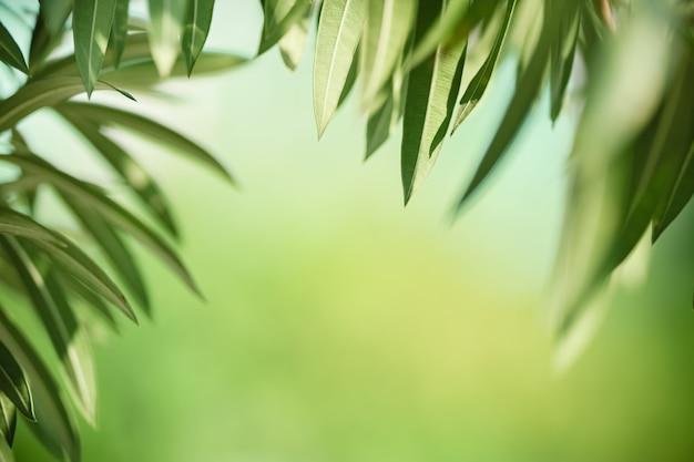 Piękny Widok Natury Zielony Liść Na Tle Niewyraźne Zieleni Premium Zdjęcia