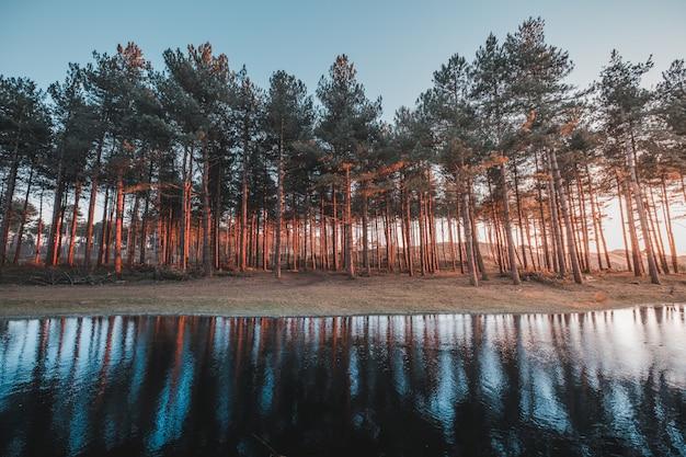 Piękny Widok Odbicie Drzewa W Jeziorze Chwytającym W Oostkapelle, Holandie Darmowe Zdjęcia