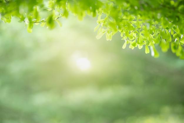 Piękny Widok Przyrody Zielony Liść Na Tle Niewyraźne Zieleni Pod światło Słoneczne Premium Zdjęcia