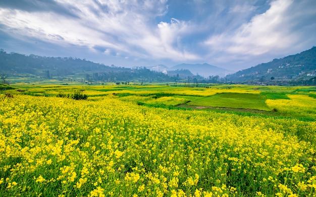 Piękny Wiosenny Widok Na Farmę Blossom Musterd W Dolinie Katmandu W Nepalu Premium Zdjęcia