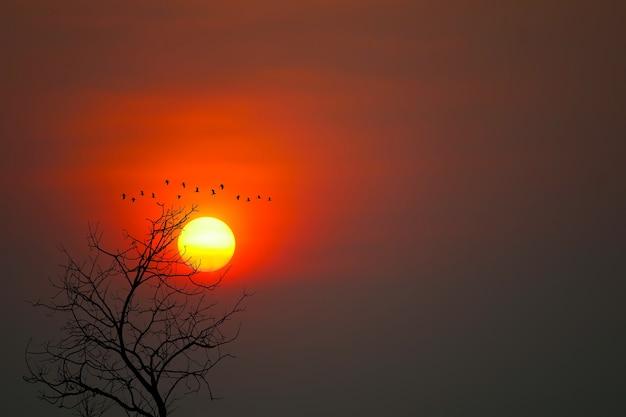 Piękny Zachód Słońca Z Powrotem Sylwetka Ptaki Latające I Suche Drzewa Na Tle Ciemnego Czerwonego Nieba Premium Zdjęcia