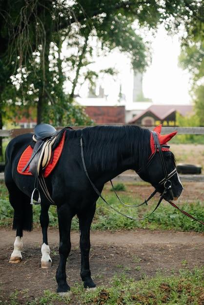 Piękny, Zadbany Koń W Pełnym Biegu, Pasący Się Na Farmie Wśród Drzew. Gospodarstwo Rolne Premium Zdjęcia