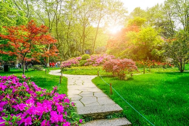 Piękny Zielony Park Darmowe Zdjęcia
