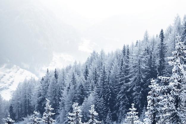Piękny Zimowy Krajobraz Z Pokrytym śniegiem Górskim Lasem Premium Zdjęcia