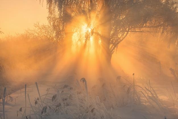 Piękny zimowy wschód słońca na mroźnej rzece Premium Zdjęcia