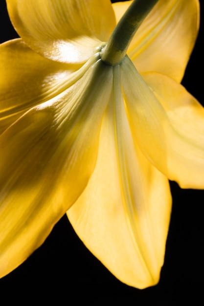 Piękny żółty Kwiat Lilii Makro Darmowe Zdjęcia
