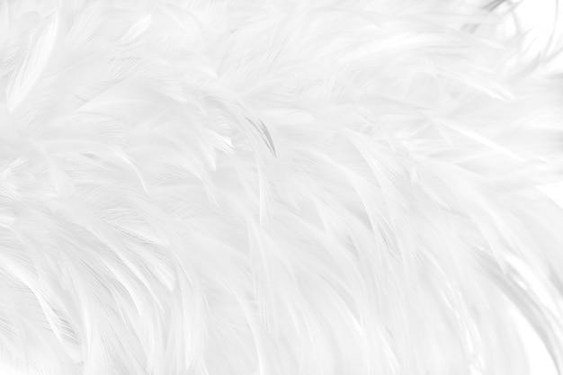 Pięknych Białych Szarych Ptasich Piórek Tekstury Deseniowy Tło. Premium Zdjęcia
