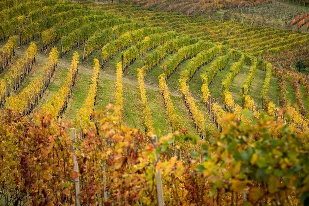 Piemont Wsi Jesienią Premium Zdjęcia