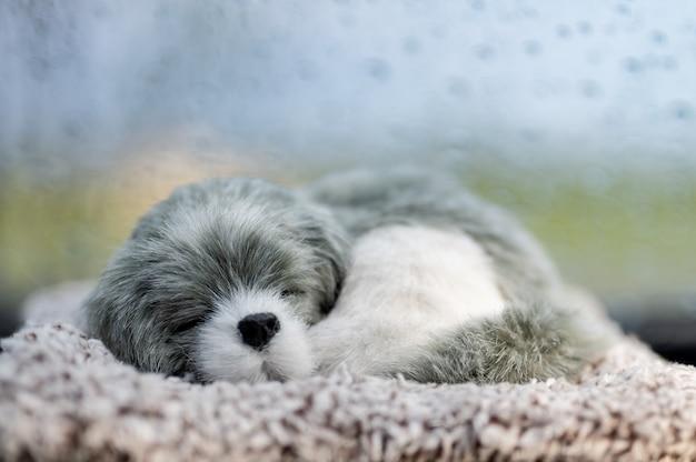 Pies lalka spanie przed samochodem Premium Zdjęcia
