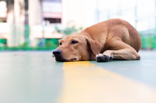 Pies Leży Na Ziemi Premium Zdjęcia