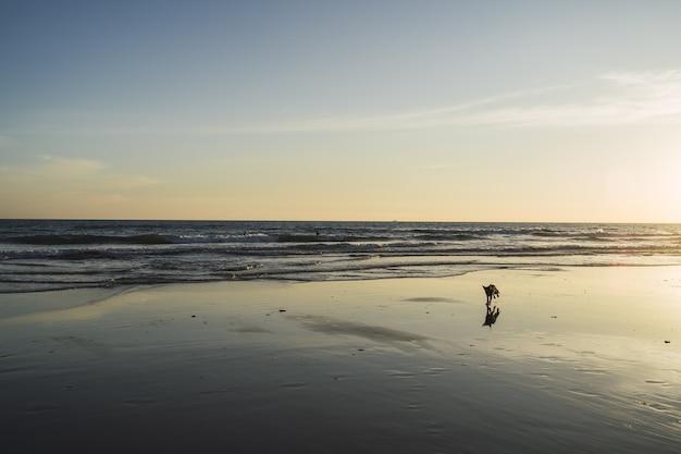 Pies Na Plaży Z Pięknymi Falami Morskimi Darmowe Zdjęcia