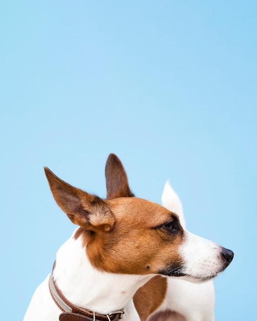 Pies O Wysokim Kącie Z Posiekanymi Uszami Darmowe Zdjęcia