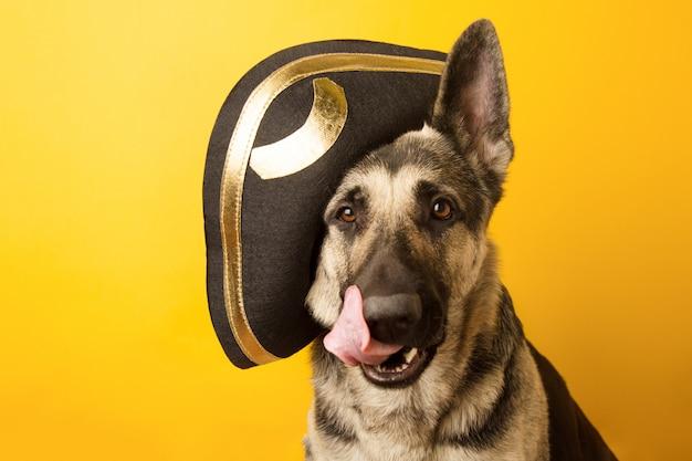 Pies pirat - owczarek wschodnioeuropejski ubrany w pirata Premium Zdjęcia