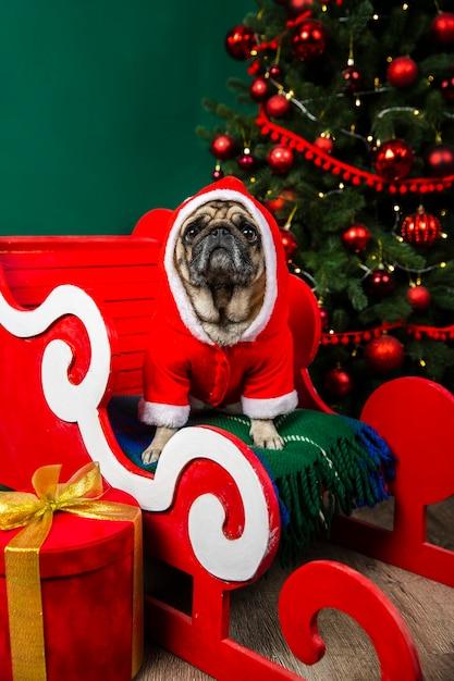 Pies sobie kostium świętego mikołaja, siedząc w sanie Darmowe Zdjęcia