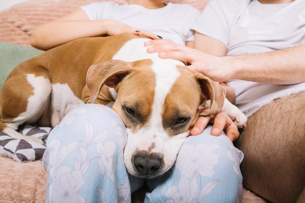 Pies z właścicielami w godzinach porannych Darmowe Zdjęcia