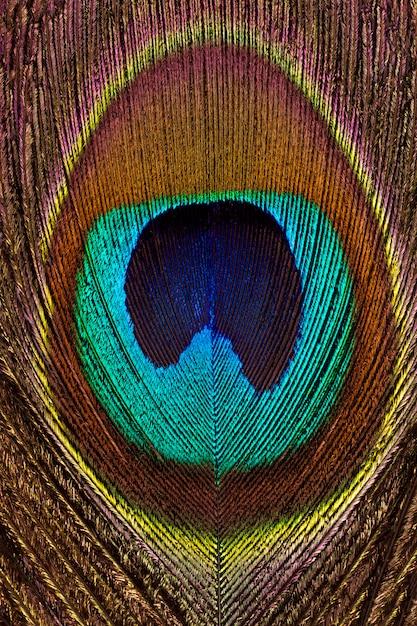 Pionowe Tło Zbliżenie Jasne I Kolorowe Pawie Pióra. Premium Zdjęcia
