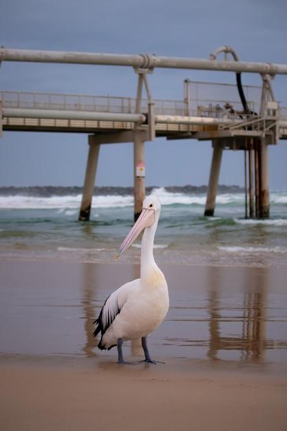 Pionowe Ujęcie Białego Pelikana Na Plaży Z Molo Darmowe Zdjęcia
