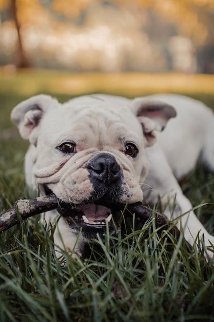 Pionowe Ujęcie Cute Dog żucia Na Patyku Darmowe Zdjęcia